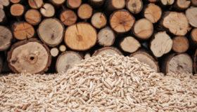 La biomasse, omniprésente en Wallonie, inspire la presse.
