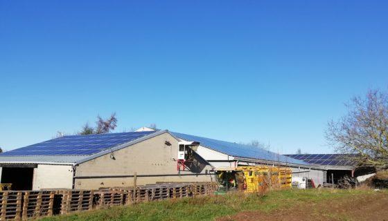 831 panneaux photovoltaïques sur les toits d'une exploitation agricole à Donceel.